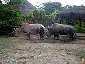 15-5-峇里島-Safari Marine Park野生動物園:IMG_6568峇里島-Safari Marine Park野生動物園.jpg