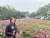 杜鵑花展在大安森林公園:20210304_152343-uid-52104438-1EC9-4756-8154-03E9184FB3F5-10825458.jpg