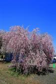 日本12天賞紫藤....VIP團之旅34-29角館-武家屋敷園區:A81Q7655.JPG