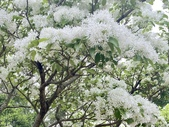 杜鵑花展在大安森林公園:20210304_152726-uid-5B9FAA0C-4664-4650-8912-DCE9F399839F-8877099.jpg