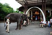 15-5-峇里島-Safari Marine Park野生動物園:IMG_1208峇里島-Safari Marine Park野生動物園.jpg