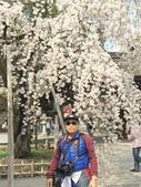 日本關西賞櫻深度之旅-平野神社- 42-22:IMG_3480.JPG