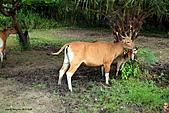 15-5-峇里島-Safari Marine Park野生動物園:IMG_1101峇里島-Safari Marine Park野生動物園.jpg