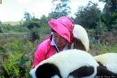 美女們被狐猴溫馨親切有禮的親親_在馬達加斯加-狐猴島Lemur Island:IMG_0359.jpg