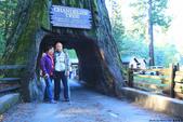 美國國家公園31天之旅紀實隨手拍搶先分享-1:美國紅木國家公園Redwood National Parks-紅木大樹洞,位於北加州與奧勒岡州海岸的交界IMG_6144.jpg