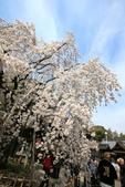日本關西賞櫻深度之旅-平野神社- 42-22:A81Q2106.JPG
