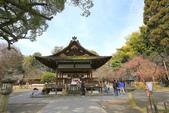 日本關西賞櫻深度之旅-平野神社- 42-22:A81Q2113.JPG