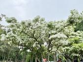 杜鵑花展在大安森林公園:20210304_152556-uid-C292494B-D905-4ADD-93D3-ECC1A9EA1AD0-9158690.jpg