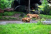 15-5-峇里島-Safari Marine Park野生動物園:IMG_1241峇里島-Safari Marine Park野生動物園.jpg