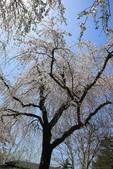 日本12天賞紫藤....VIP團之旅34-29角館-武家屋敷園區:A81Q7690.JPG