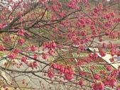 日本關西賞櫻深度之旅-鳥取花迴廊42-8:IMG_2313.JPG