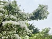 杜鵑花展在大安森林公園:20210304_152630-uid-14A9F22D-CA63-4639-B9BA-F81DA1B7C022-10648804.jpg