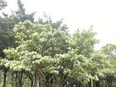 杜鵑花展在大安森林公園:20210304_152818-uid-33DB8AF3-B934-43C4-8EB8-8FE84EB52829-10601302.jpg