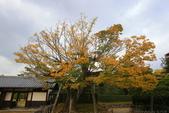 日本四國人文藝術+楓紅深度之旅-栗林公園 53-8:A81Q9693.JPG