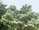 杜鵑花展在大安森林公園:20210304_152836-uid-38D4370B-E451-4DE7-AC00-15E5C525F8F9-10082763.jpg