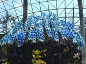日本關西賞櫻深度之旅-鳥取花迴廊42-8:IMG_2387.JPG