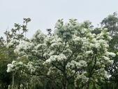 杜鵑花展在大安森林公園:20210304_153007-uid-F84DC569-6A78-4195-9BCD-D632A914DB7D-10288662.jpg