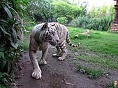 15-5-峇里島-Safari Marine Park野生動物園:IMG_6599峇里島-Safari Marine Park野生動物園.jpg