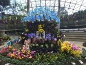 日本關西賞櫻深度之旅-鳥取花迴廊42-8:IMG_2388.JPG