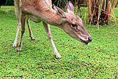 15-5-峇里島-Safari Marine Park野生動物園:IMG_1285峇里島-Safari Marine Park野生動物園.jpg