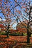 日本四國人文藝術+楓紅深度之旅-小豆島橄欖公園53-36:A81Q0324.JPG