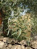 阿爾巴尼亞_喀魯耶山頭城KRUJA_史肯伯格博物館:DSC00364A阿爾巴尼亞__喀魯耶山頭城景緻.jpg