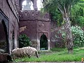 15-5-峇里島-Safari Marine Park野生動物園:IMG_6600峇里島-Safari Marine Park野生動物園.jpg