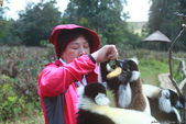 美女們被狐猴溫馨親切有禮的親親_在馬達加斯加-狐猴島Lemur Island:IMG_0363.jpg