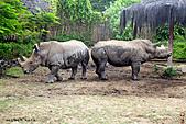 15-5-峇里島-Safari Marine Park野生動物園:IMG_1142峇里島-Safari Marine Park野生動物園.jpg