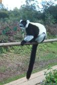 美女們被狐猴溫馨親切有禮的親親_在馬達加斯加-狐猴島Lemur Island:IMG_0354.jpg