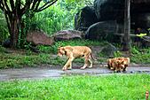 15-5-峇里島-Safari Marine Park野生動物園:IMG_1242峇里島-Safari Marine Park野生動物園.jpg