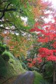 日本四國人文藝術+楓紅深度之旅-金刀比羅宮楓紅盛開秘境 53-33:A81Q0272.JPG