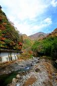 日本四國人文藝術+楓紅深度之旅-別府峽楓葉散策53-23:A81Q0026.JPG