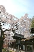 日本關西賞櫻深度之旅-平野神社- 42-22:A81Q2109.JPG