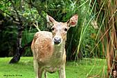 15-5-峇里島-Safari Marine Park野生動物園:IMG_1286峇里島-Safari Marine Park野生動物園.jpg