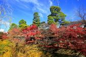 日本四國人文藝術+楓紅深度之旅-倉敷城美觀地散策53-45:A81Q0523.JPG