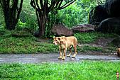 15-5-峇里島-Safari Marine Park野生動物園:IMG_1243峇里島-Safari Marine Park野生動物園.jpg