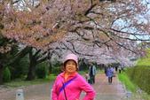 日本九州春櫻尊爵全覽之旅-1_福岡市舞鶴公園-綻放春櫻:A81Q5757.JPG