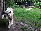 15-5-峇里島-Safari Marine Park野生動物園:IMG_6603峇里島-Safari Marine Park野生動物園.jpg