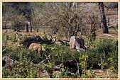 14.東非獵奇行-玻茲瓦納-丘北國家公園:_MG_2698玻茲瓦那_蠻荒樂園-丘北國家公園.JPG