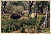 14.東非獵奇行-玻茲瓦納-丘北國家公園:_MG_2699玻茲瓦那_蠻荒樂園-丘北國家公園.JPG