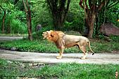 15-5-峇里島-Safari Marine Park野生動物園:IMG_1214峇里島-Safari Marine Park野生動物園.jpg