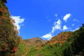 日本四國人文藝術+楓紅深度之旅-別府峽楓葉散策53-23:A81Q0063.JPG