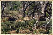 14.東非獵奇行-玻茲瓦納-丘北國家公園:_MG_2700玻茲瓦那_蠻荒樂園-丘北國家公園.JPG