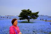 日本12天賞紫藤....VIP團之旅34-31日立海濱粉蝶花+鬱金香公園:A81Q7933.JPG