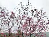 春節參拜走春-廟宇之美:IMG_4225.JPG