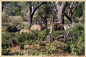 14.東非獵奇行-玻茲瓦納-丘北國家公園:_MG_2701玻茲瓦那_蠻荒樂園-丘北國家公園.JPG