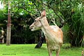 15-5-峇里島-Safari Marine Park野生動物園:IMG_1287峇里島-Safari Marine Park野生動物園.jpg