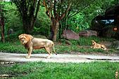15-5-峇里島-Safari Marine Park野生動物園:IMG_1215峇里島-Safari Marine Park野生動物園.jpg