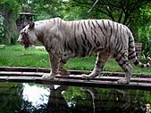 15-5-峇里島-Safari Marine Park野生動物園:IMG_6602峇里島-Safari Marine Park野生動物園.jpg